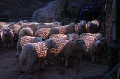 Extreme Sheep LED Art « Videolous