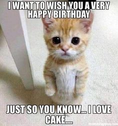 101 Funny Cat Birthday Memes - I want to wish you a very happy birthday.I love cake. If a feline lover in your life is expecting a birthday celebration, start it off right by sending them hilarious cat birthday memes!