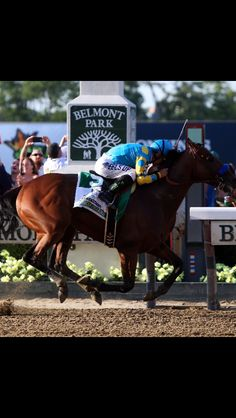 Victor Espinoza, celebrates atop American Pharoah after winning the running of the Belmont Stakes at Belmont Park on June 2015 in Elmont, New York. With the wins American Pharoah becomes the first horse to win the Triple Crown in 37 years. Thoroughbred Horse, Horse Horse, The Belmont Stakes, Triple Crown Winners, American Pharoah, Champions Of The World, Morgan Horse, Sport Of Kings, Racehorse