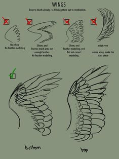 How To Draw Wings - Reference Guide | Drawing References and Resources | Scoop.it