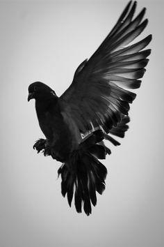 Dove by Knut A. Dahl, via 500px