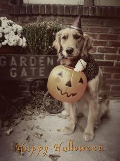 Happy Halloween, from Bea Arthur.