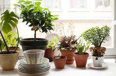 kitchen window plant display