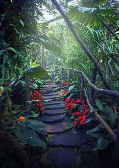 Image result for fototapeta las tropikalny