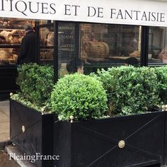 Happy Mother's Day!  A bit of Parisian charm to wish everyone a wonderful day.  #fleaingfrance #garden #topiary #Paris #France