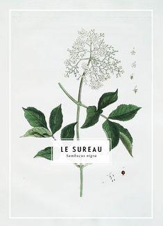 Le Sureau print