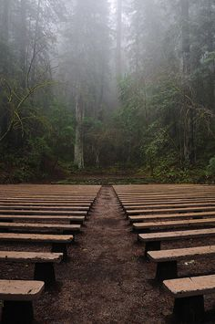 So many memories singing on stage as a little girl.... To all the trees and little critters. Good thing it wasn't that populated back then!  Armstrong Redwoods State Reserve, Guerneville CA (√)