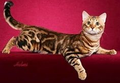 1000+ images about FELINES - FABULOUS & FREAKY on ...