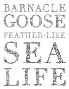 Barnacle Goose Typeface by Allison Nambo, via Behance