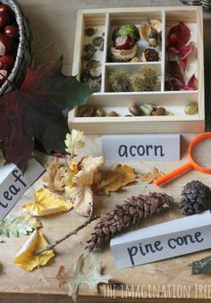 Autumn Exploration Table - nice use of adding word cards too, to boost vocabulary! Seasons Activities, Nature Activities, Autumn Activities, Science Nature, Fall Preschool, Preschool Science, Primary Science, Investigation Area, Investigations