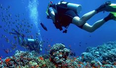 The best scuba diving in San Diego is found at La Jolla Cove. As part of the La Jolla Cove Ecological Reserve, this protected underwater park has giant kelp forests full of a variety of sea life. There are also numerous sea caves to explore.