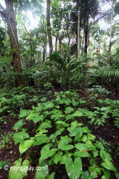 Lowland rainforest in Ujung Kulon National Park