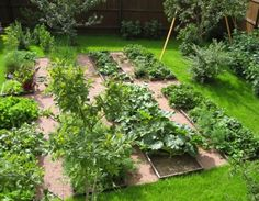 vegetable garden design surrounded by green lawn