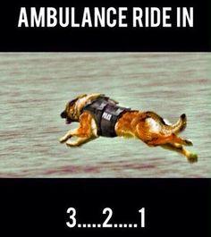 Malinois Truth Belgium Malinois, Belgian Malinois Dog, Belgian Shepherd, Shepherd Dog, German Shepherds, K9 Officer, Military Working Dogs, All Hero, Rainbow Bridge