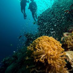 Andreas & Marion also did their first open water dives today! #welcometounderwaterworld #scubafish_ #scubaadventures #kohlanta #kohhaa #instadive #scuba #scubajunkies #openwater #padi