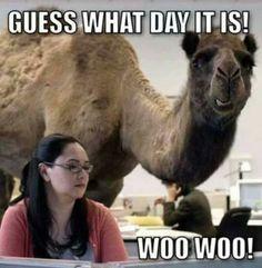 Hump Day Camel Commercial Wwwbilderbestecom