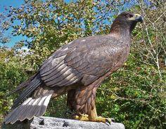 Деревянные скульптуры птиц | Краснодеревщик