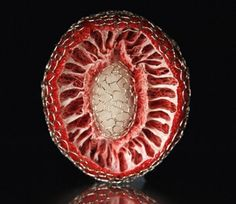 Eun Yeong Jeong and artist that works with metalsmithing. Pattern Art, Color Patterns, Natural Form Art, Organic Form, Seed Pods, Recipe Images, Patterns In Nature, Fruit And Veg, 3d Printing