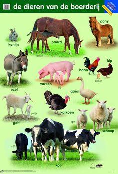 Poster De dieren van de boerderij Preschool At Home, Preschool Activities, Farm Animals, Animals And Pets, Learn Dutch, Dutch Language, Teacup Pigs, Show Cattle, Showing Livestock
