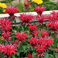 Top plants that thrive in clay clay soil hummingbird and bees a list of long blooming flowers for hummingbirds note they have fuchsias listed as an annual but there are many many varieties that are perennial too mightylinksfo Choice Image