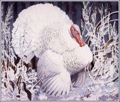 Charles Tunnicliffe - White Turkey