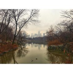 Even on a cloudy & miserable day Canteal Park is still pretty      #newyork #nyc #centralpark #newyorkcity #loveit #sopretty #cloudy #oakbridge #lake #nofilterneeded #nature #naturalbeauty #blogger #lifestyleblogger #travelblogger #tblogger #lblogger #lifeloveflowers #project365