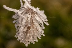 Check out Frozen plant by ChristianThür Photography on Creative Market