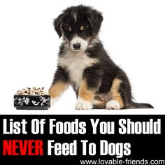 "❤ Many people assume - mistakenly - that ""human food"" is bound to be safe for their pets. Nothing could be further from the truth! Some human foods can be poisonous to dogs and you need to know what they are. ❤"
