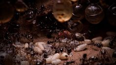 There are some pretty obvious things you can do to keep ants out of your home. Keep the kitchen clean, cover food, take out the trash often, use trash bins with lids, etc. Sometimes that isn't enough to keep our pesky ant neighbors out of the house. Here are some ideas that don't involve harsh …
