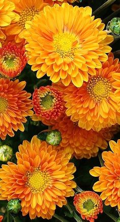 fall flowers...