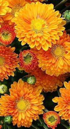 fall flowers...