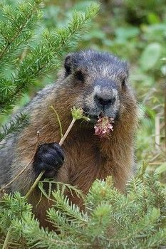 Groundhog Day:  FREE Activities, Crafts, Coloring Pages & Treats for Kids