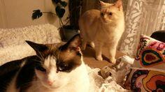 Yummi et charli