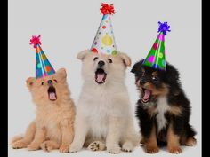 Dogs Singing Happy Birthday - These Dogs Have a special message for you. Woof Woof Woof Woof which means Happy Birthday to You! Birthday Songs Video, Happy Birthday Video, Happy Birthday Pictures, Singing Happy Birthday, Happy Birthday Cards, Birthday Greetings, Birthday Photos, Happy Birthday Funny Dog, Messages
