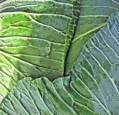 Surface of the flat cabbage! #cabbage #flat #vegetable #kaali #keräkaali #vegetable #vihannes.