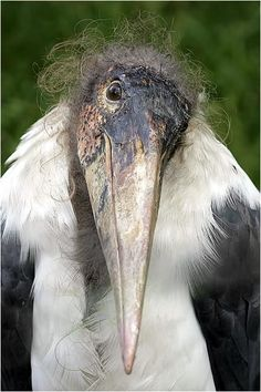 ugly little thing. Stork - magnificent birds who bring good fortune to those on whose roofs they nest! Pretty Birds, Love Birds, Beautiful Birds, Animals Beautiful, Beautiful Pictures, Animals And Pets, Funny Animals, Cute Animals, Photo Animaliere