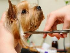 Tip #159: How To Choose A Good Dog Groomer! Know what to look for and the question to ask to find the best groomer for your prized pooch. #doggrooming