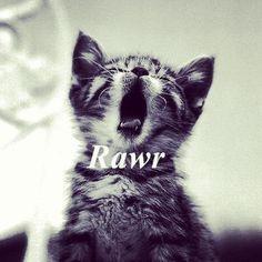 Rawr kittie cat