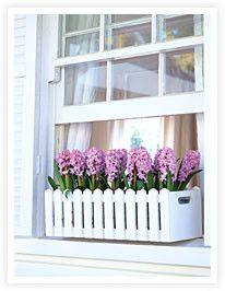A winter window flower box