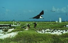 Johnston Atoll (US Territory).