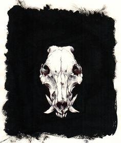 Image of Boar skull
