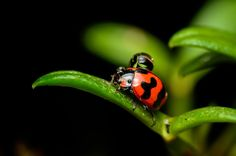 Macro shot of lady bug on leaf