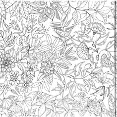 Passion For Pencils My Secret Garden Colouring Book Part 3