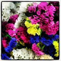 #flowers #nature #colours #green #purple #parque_das_nações #lisboa #Portugal #instagram #webstagram #statigram #ig #igers #wegram - @naerp26- #webstagram