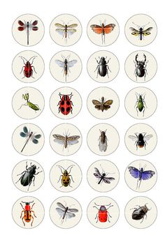 OFF Vintage Insects and Bugs 1 inch by MobyCatGraphics Preschool Learning Activities, Preschool Science, Round Robin, Termite Control, Charles Darwin, Bugs And Insects, Button Crafts, Collage Sheet, Digital Collage