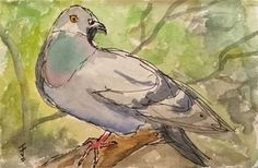 """Daily+Paintworks+-+""""Sitting+Pigeon""""+-+Original+Fine+Art+for+Sale+-+©+Jane+Frederick"""