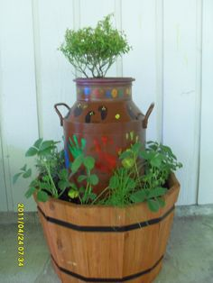 Old metal milk jug with a dwarf blueberry in the top and herbs and strawberries in the bottom.