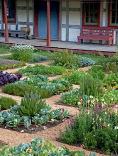 edible landscape. This would be so much nicer than mowing grass!