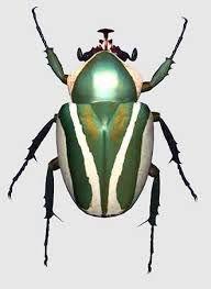 Kết quả hình ảnh cho scarab