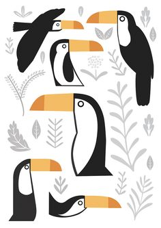 Sarah Abbott - Toucans sarah-abbott.co.uk